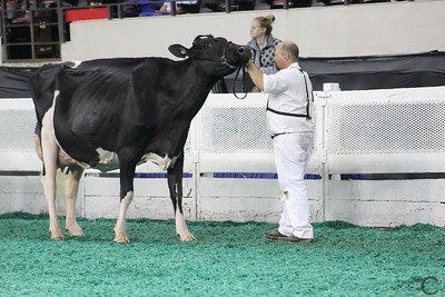 Mid-East Fall Natl Holstein Senior Cow Show 2016