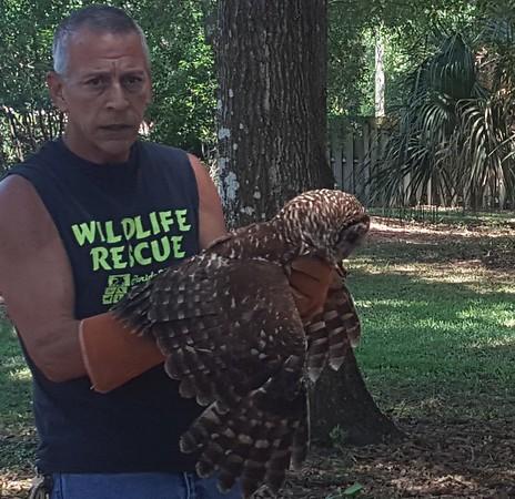 2016-05-07 Owl Rescue