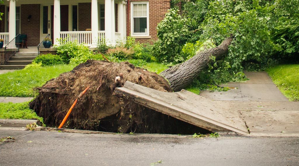. The sidewalk came up with this fallen tree in Minneapolis. (Photo: Ryan Coleman)