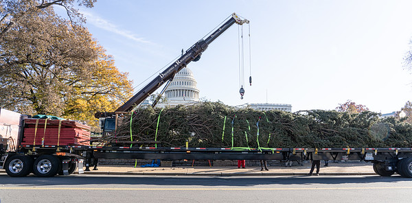 Capitol Christmas Tree 2019