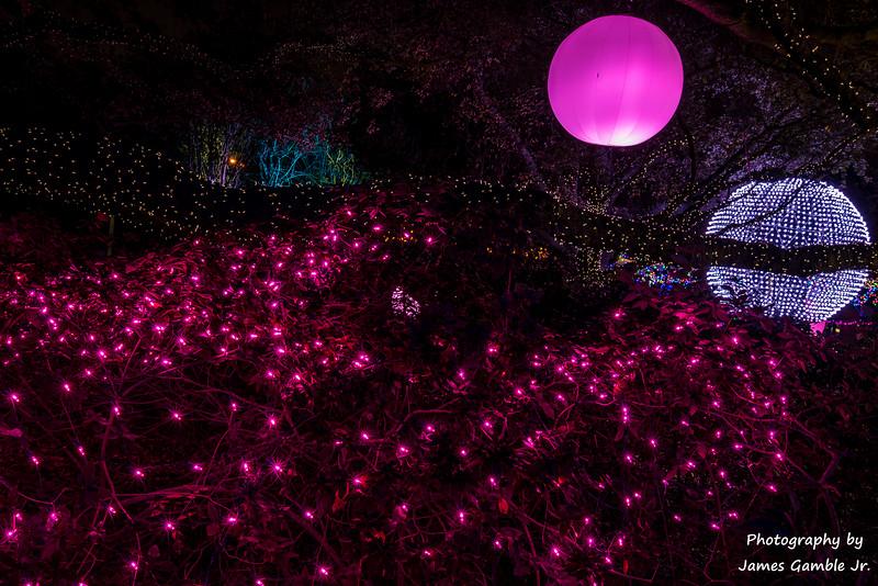 Houston-Zoo-Lights-3140.jpg