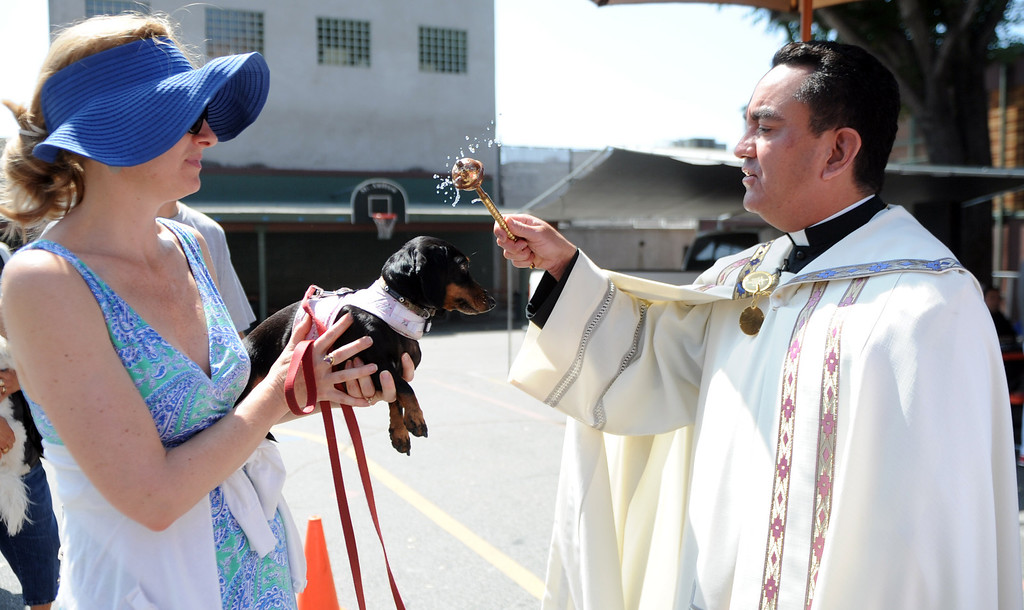 ". Father Paul Sustayta blesses ""Sedona\"" during the traditional Blessing of the Animals at St Andrew Church School on Saturday, March 30, 2013 in Pasadena, Calif. 