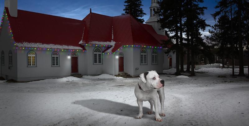 snow-dog.jpg