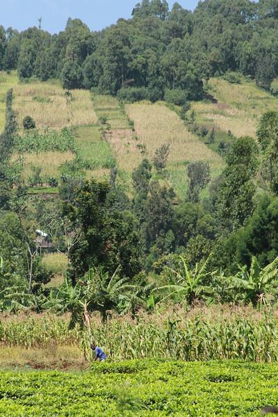 Kenya Part1 '15 2645.JPG