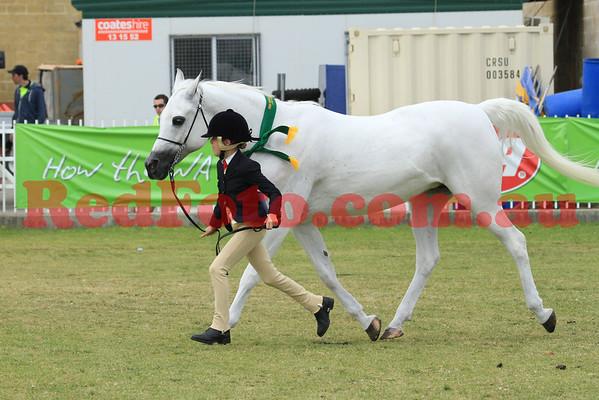 2012 10 02 Perth Royal Show Arabian