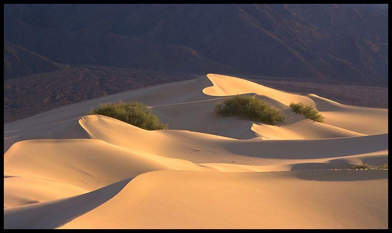 Desertscape_v1.jpg