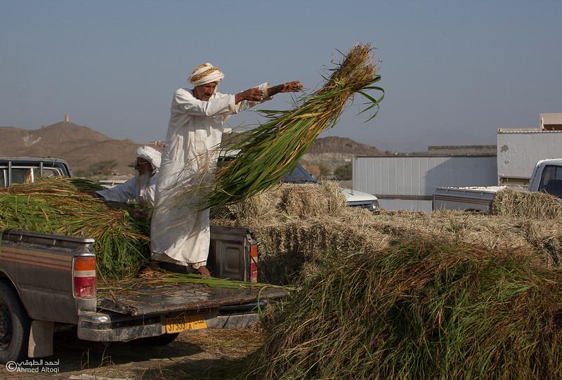Traditional market (100)- Oman.jpg