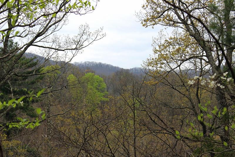 Spring Greens and Dogwoods.jpg