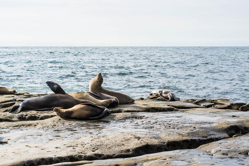 Seals (1 of 1).jpg
