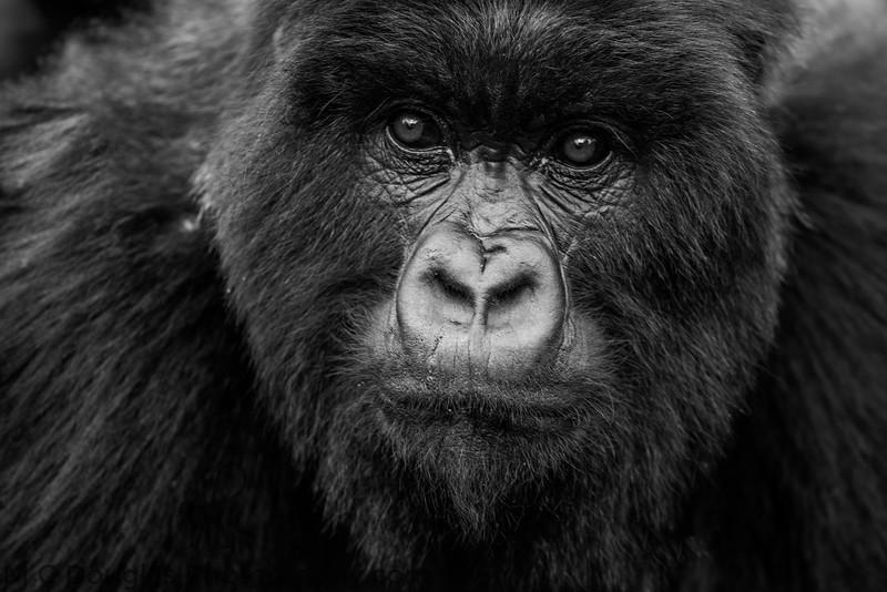 African Wildlife-11.jpg