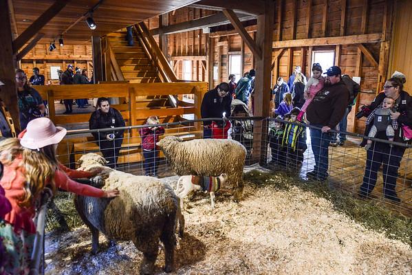 Baby Animals at Billings Farm, 2016