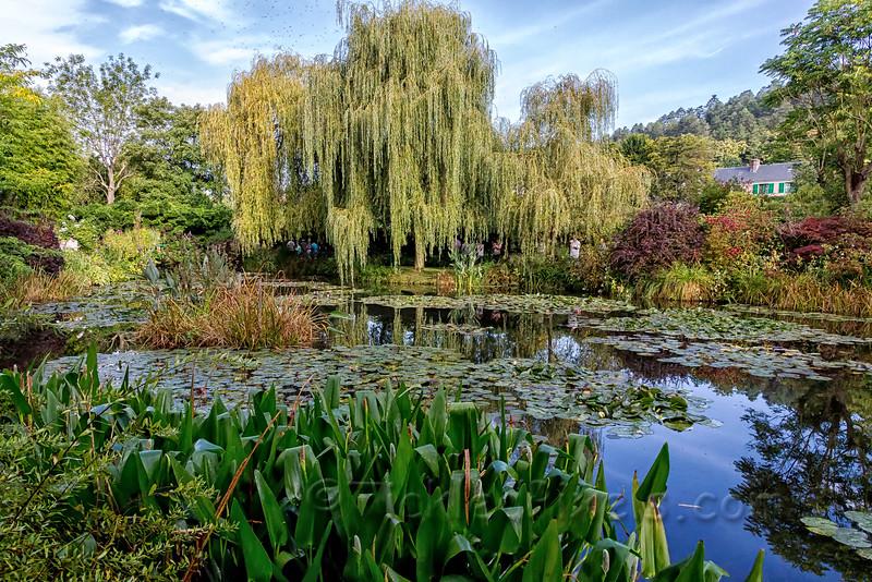 Monet's Garden - Water Lily Pond