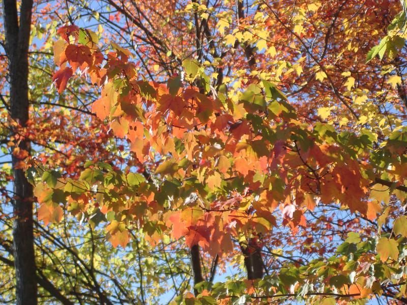 Oct07_AmesHillFoliage012.JPG