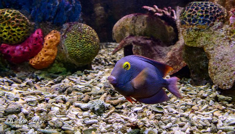 Blue Fish sm.jpg
