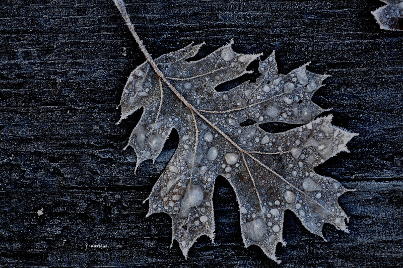 frosted 1-3-2011.jpg
