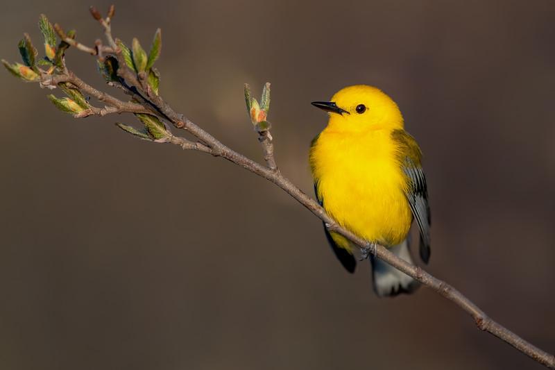 Birds of Buckeye Lake