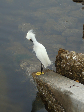 <b>Feb. '10: Ding Darling Wildlife Refuge, Florida</b>