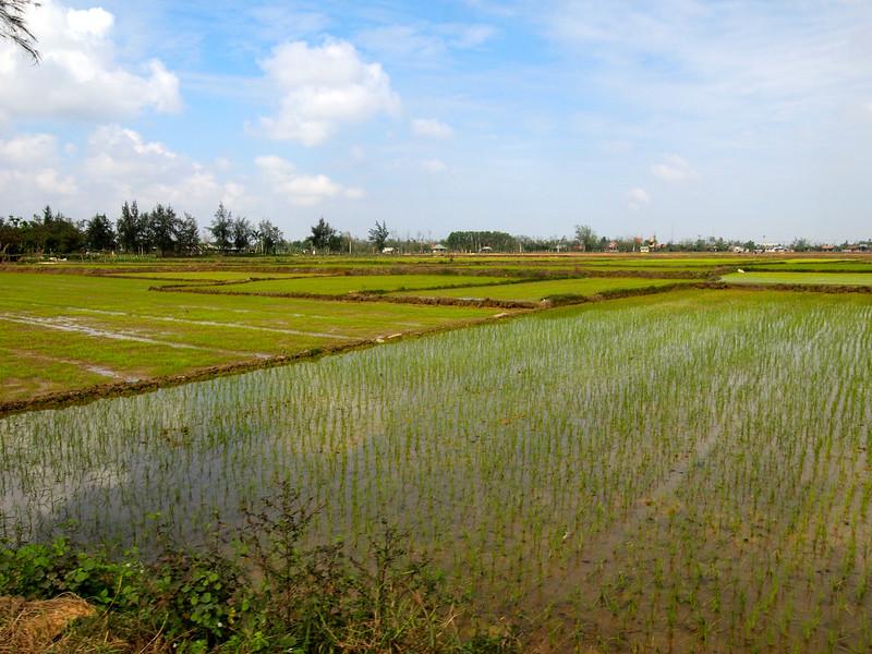 Rice paddies in Vietnam