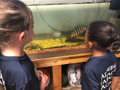 Week 33: Ocean Animals