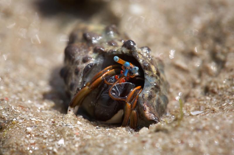 Hermit Crab - 2903.jpg