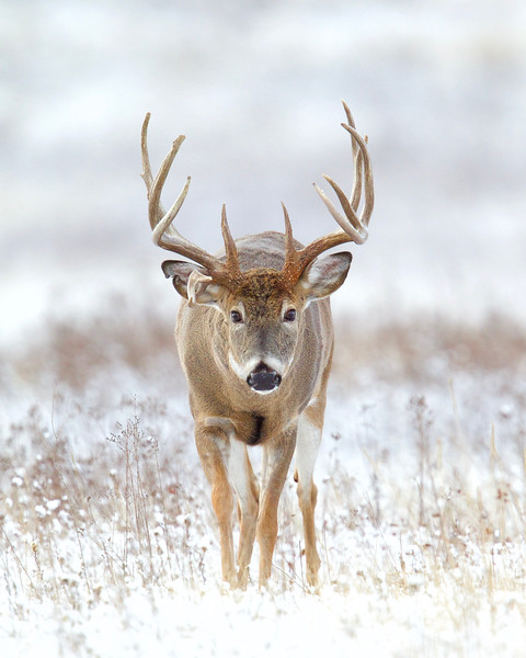 Whitetails in the Wild IMP - 1 (48).jpg