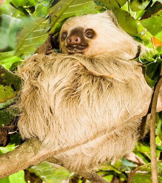 Costa Rica_Sloth-1.jpg