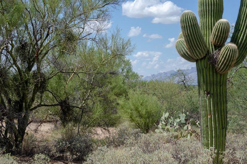20180902-Saguaro-NP-East-4300.jpg