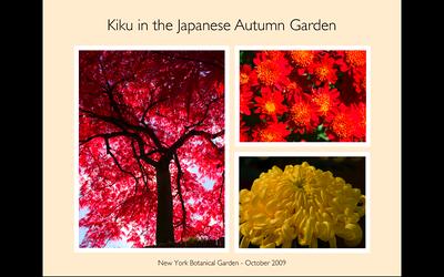 Kiku in the Japanese Autumn Garden
