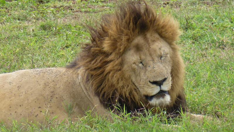 Ngorongoro Conservation Area, Africa (May 12, 2012)