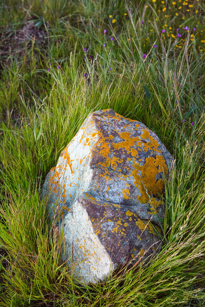Stone in Grass