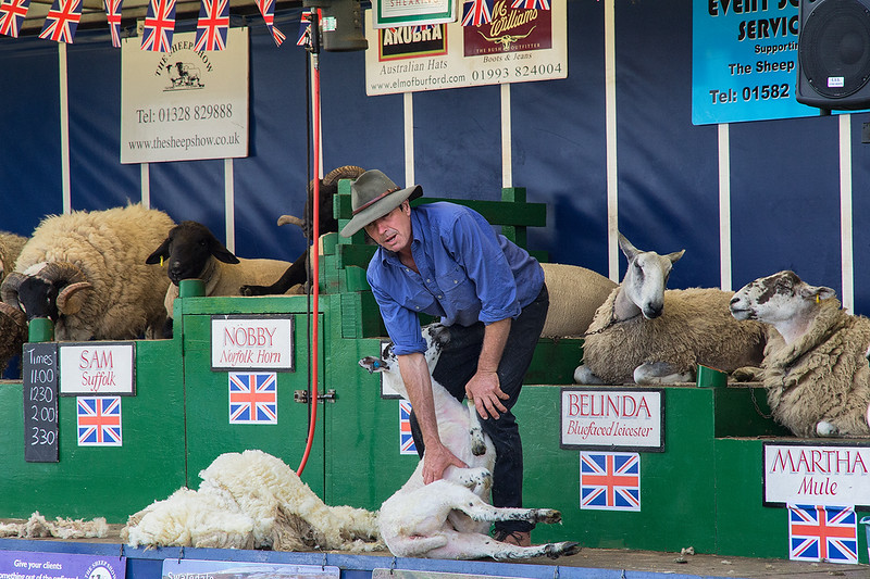 Sheep Shearing Demo 1206192887.jpg