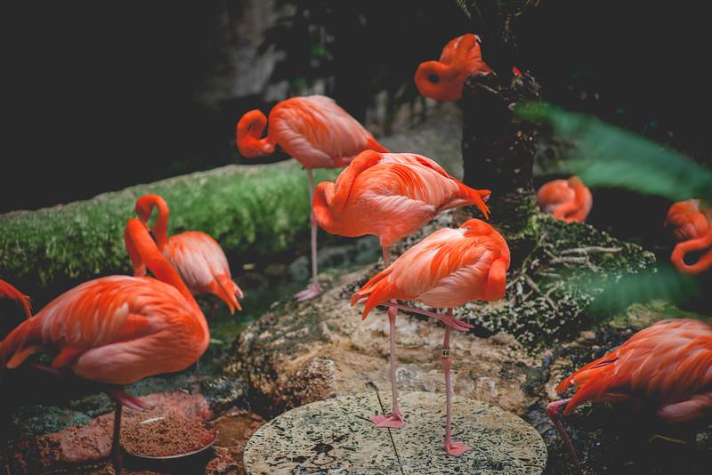 2014 10 25 Dallas World Aquarium-61.jpg