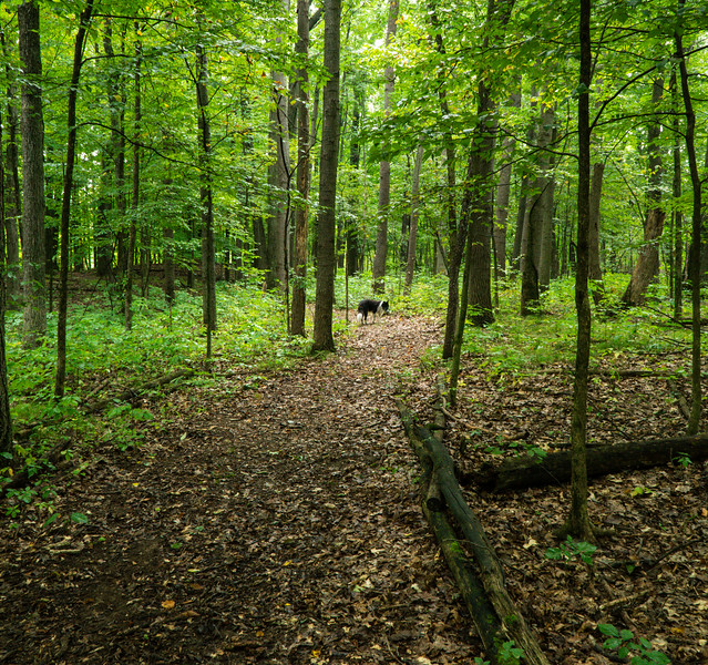 Trails at Squiers Preserve