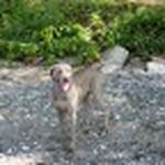 farley pups 176-2 (1).jpg