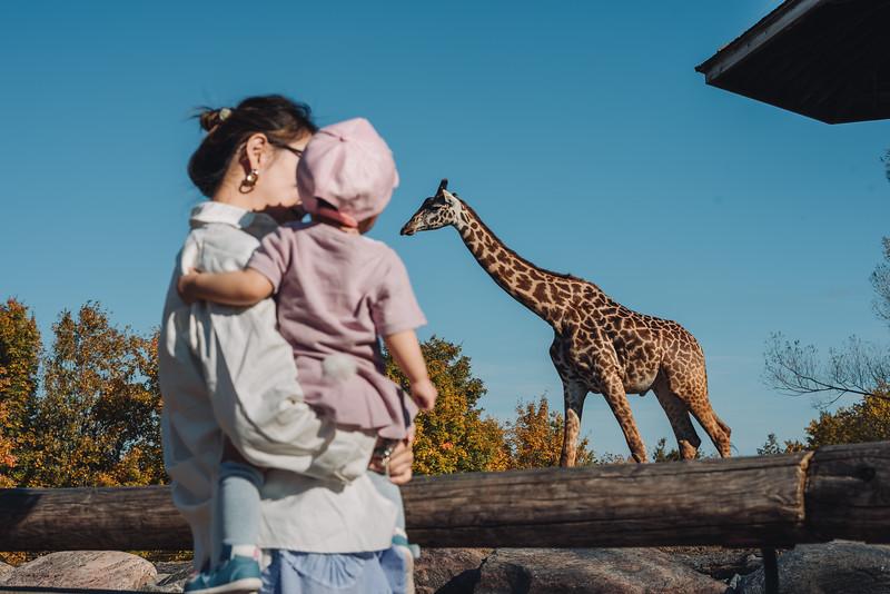 2018-10-10 BoBo Zoo-11.jpg