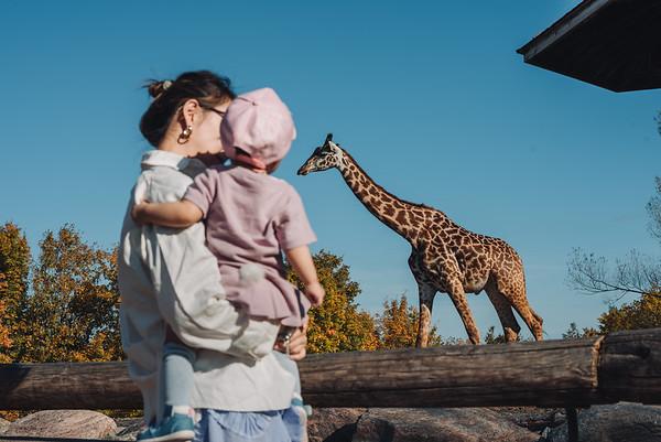 2018-10-10 BoBo Zoo