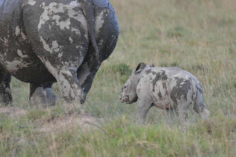 East Africa Safari 126.jpg