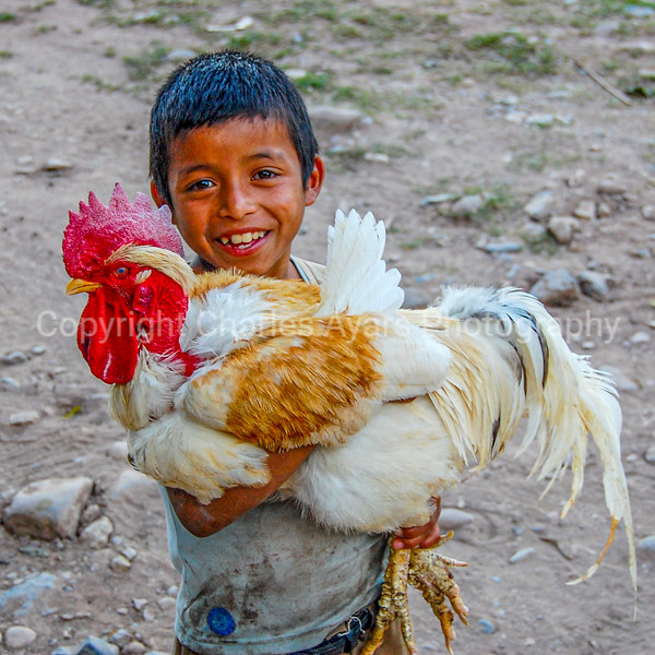 boy and chicken 1x1.jpg