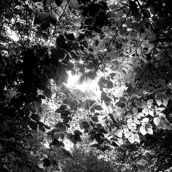 boslicht9.jpg