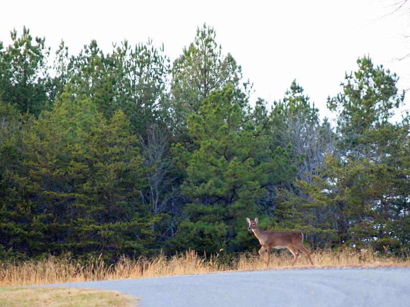 Deer Apco-004.JPG