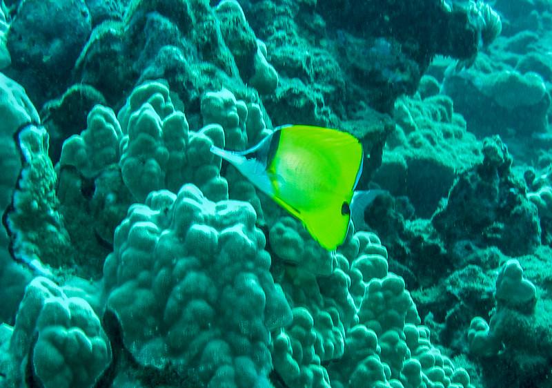 Hawaii diving - 032-2.jpg