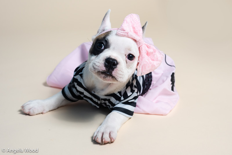 Puppies6.jpg