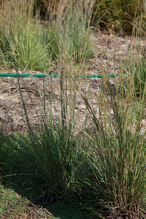 grass-2012