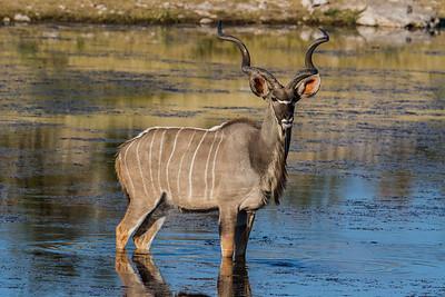 Namibia Mammals 5