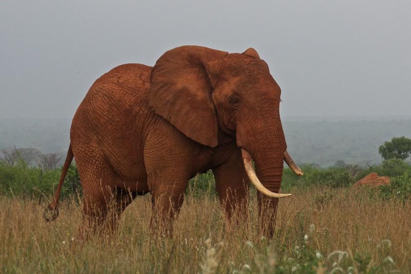 Kenya.Card3.02.2014 91