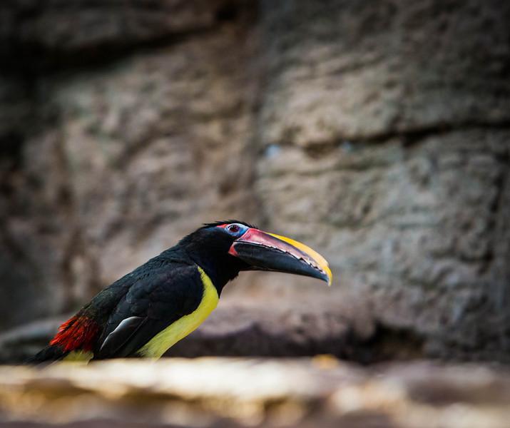 zoo-1565.jpg