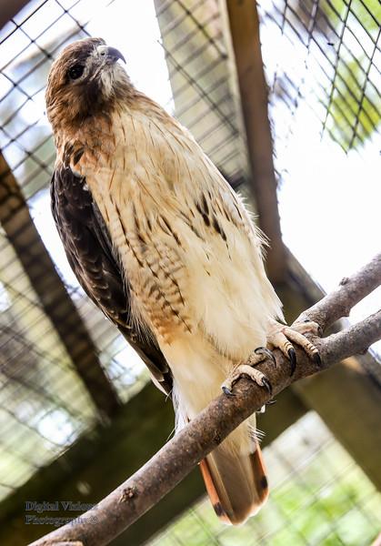 2016-07-17 Fort Wayne Zoo 999LR.jpg