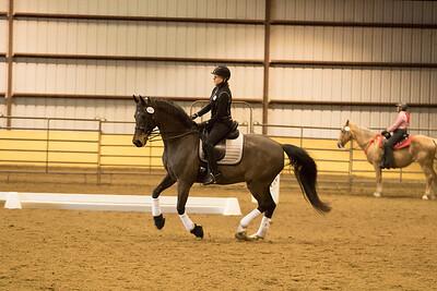 Horse 660