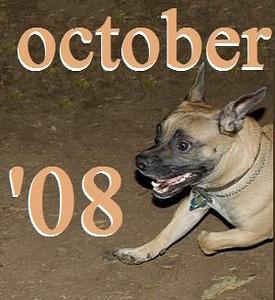 01 OCTOBER 2008
