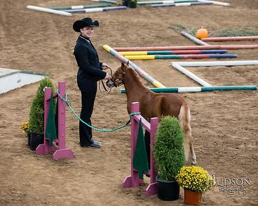31 Mini Horse In Hand Trail Sr